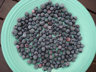 Frozen blueberry marbles on fiestaware