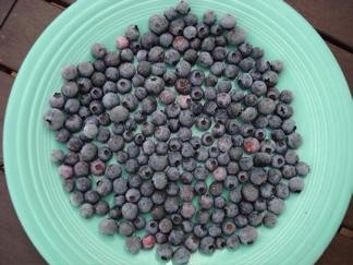 Frozen blueberry marbles on fiestaware