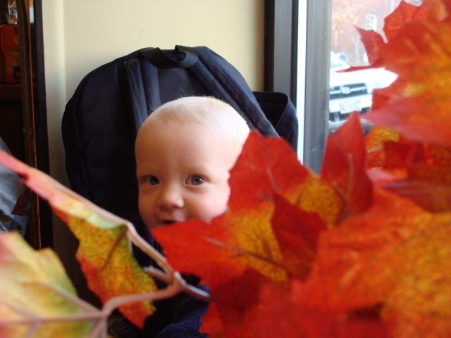 Dashiell in the Fall Leaves