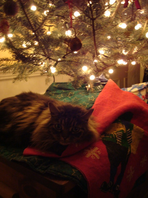 Josie the Cat naps under the Christmas tree