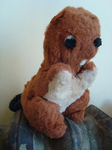 Pet Beaver