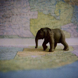 Elephant on Map