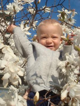 A Strange Magnolia Blossom that Looks Like a Baby Boy